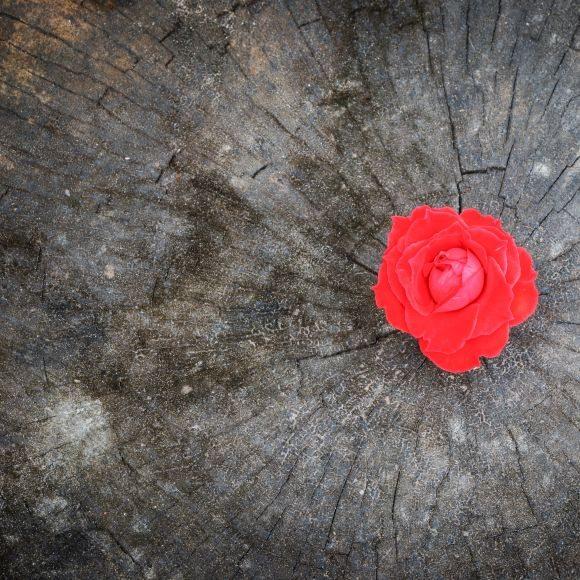Finestra Rosa: continua a generare processi di espansione